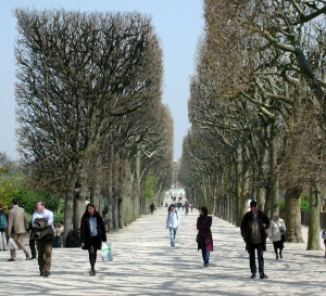 jardin walkway with pollard trees