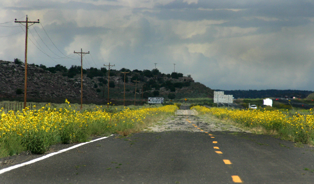 Along old 66 sunflowers
