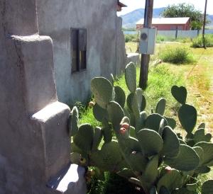 Dragoon cactus