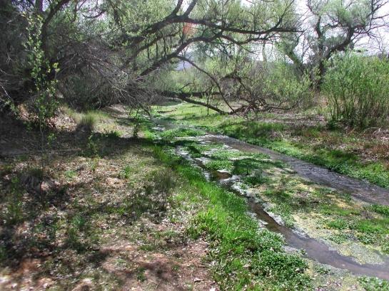 Sonoita Creek