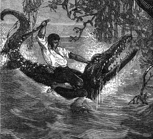 alligator crocodile